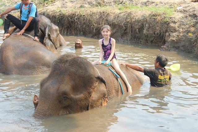 chiang_mai_elephant-chrissy